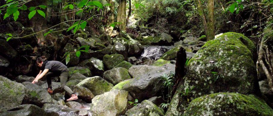 bushwalking-to-westrays-grave-lamington-national-park
