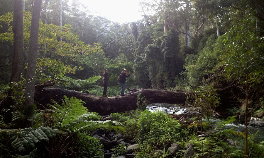 walking-lamington-national-park-christmas-creek